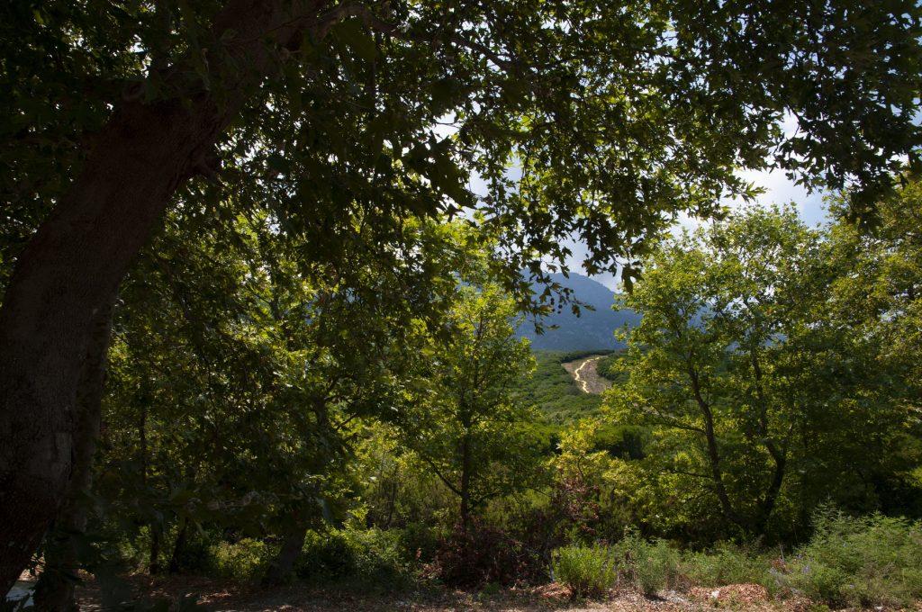 Alexandros Kaklamanos | Ephemeral landscape – How to think like a mountain
